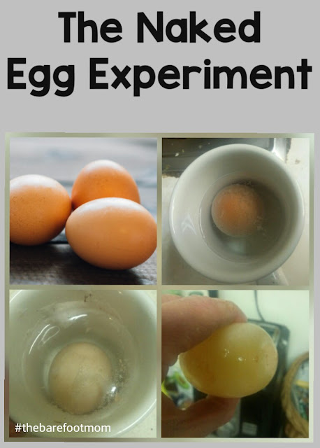 The Naked Egg Experiment- from The Barefoot Mom