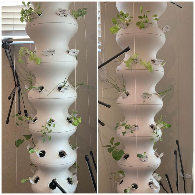 Tower Garden Indoors