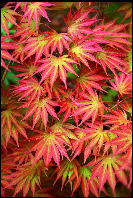 Flora Wonder Blog The Myriad Shades Of Green
