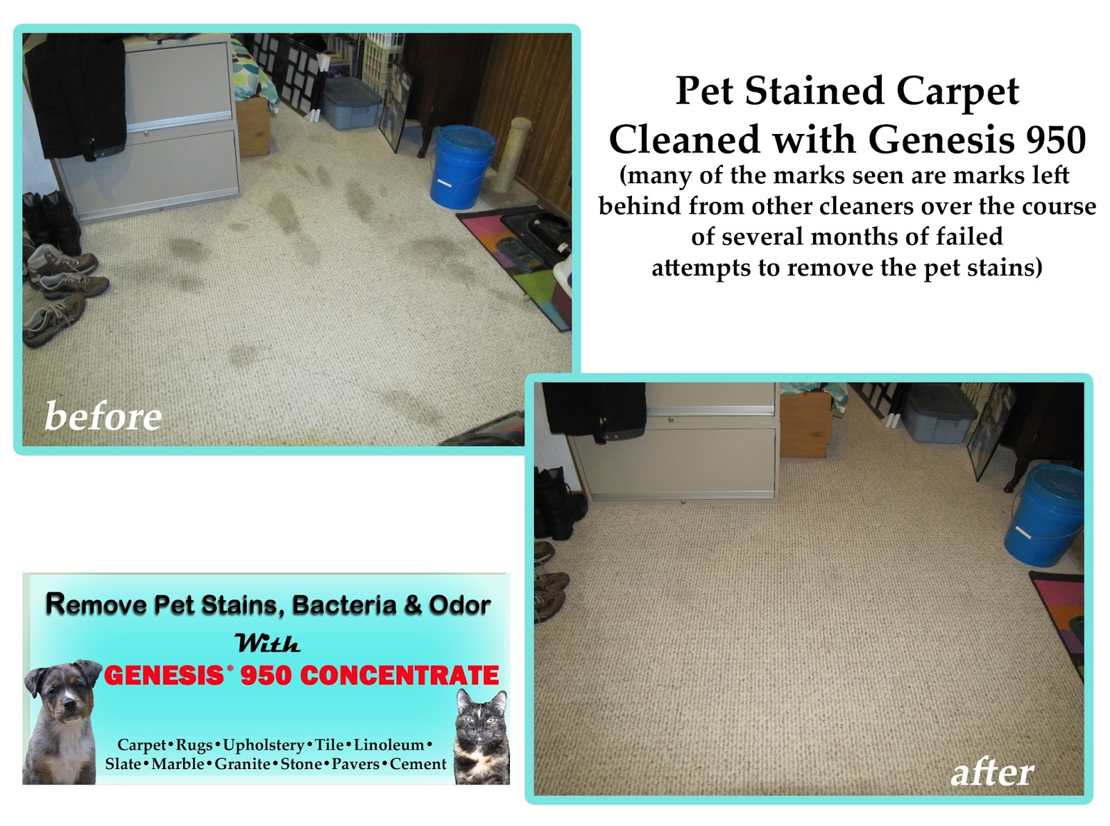 Genesis 950 Pet Stain Remover: Genesis 950 Concentrate ...