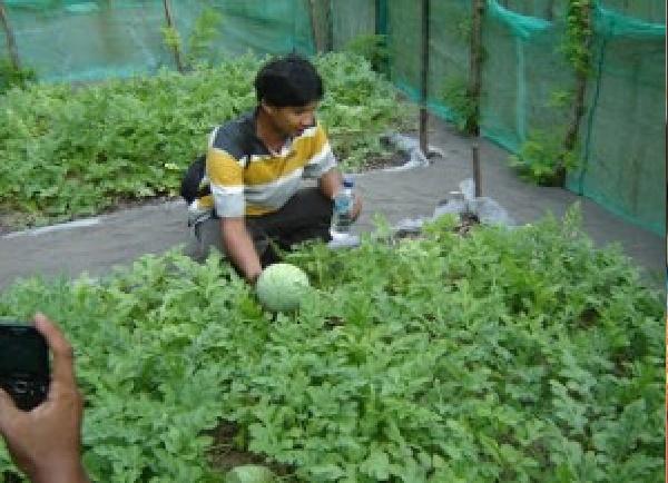 Kisah Sukses Nursalim dengan Bisnis Budidaya Semangka