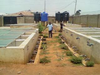 Catfish-Ponds-in-Nigeria