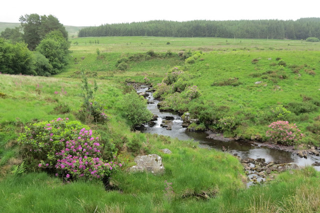 A shallow stream meanders through grassland, blossoming rhododendrons on its banks.