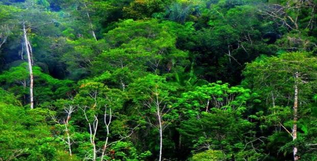 Potensi Sumber Daya Alam Hutan