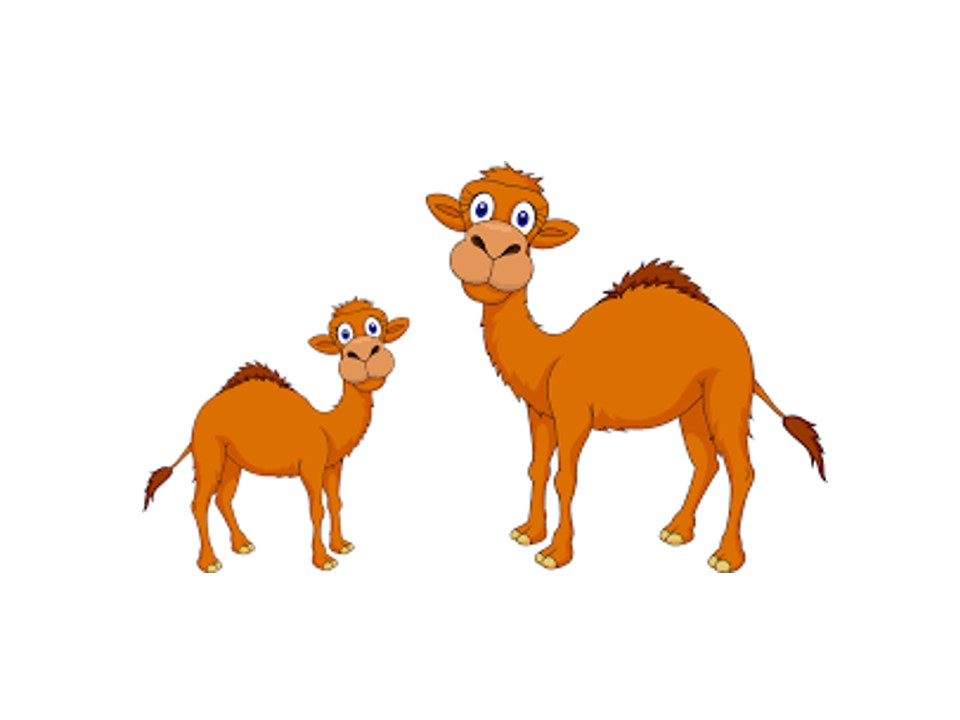 Stories for Kids - An Intelligent Question of a Camel Baby