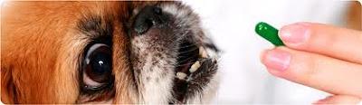 ha determinado que la aspirina para perros no es una opción aceptable y que está considerando la posibilidad de un enfoque más holístico para el manejo del dolor, tener cuidado con los ingredientes
