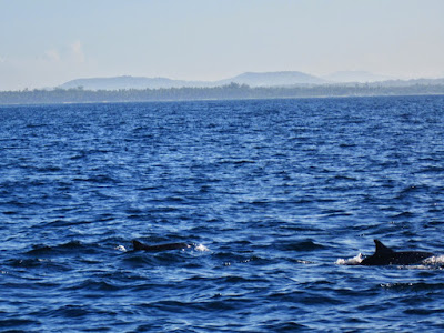 wild-dolphins-in-Panglao
