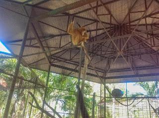 Zoo Hua Hin