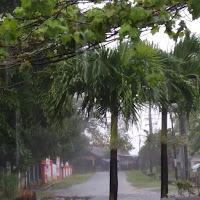 Foto-pohon-dan-jalanan-diguyur-hujan