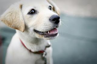 10 Cara Alami Mengobati Kudis Pada Anjing Peliharaan