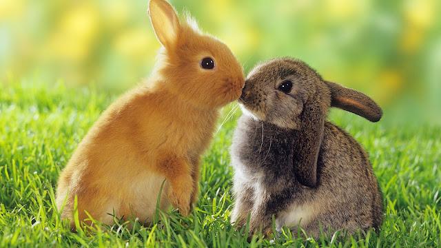 Foto van twee konijnen op het gras