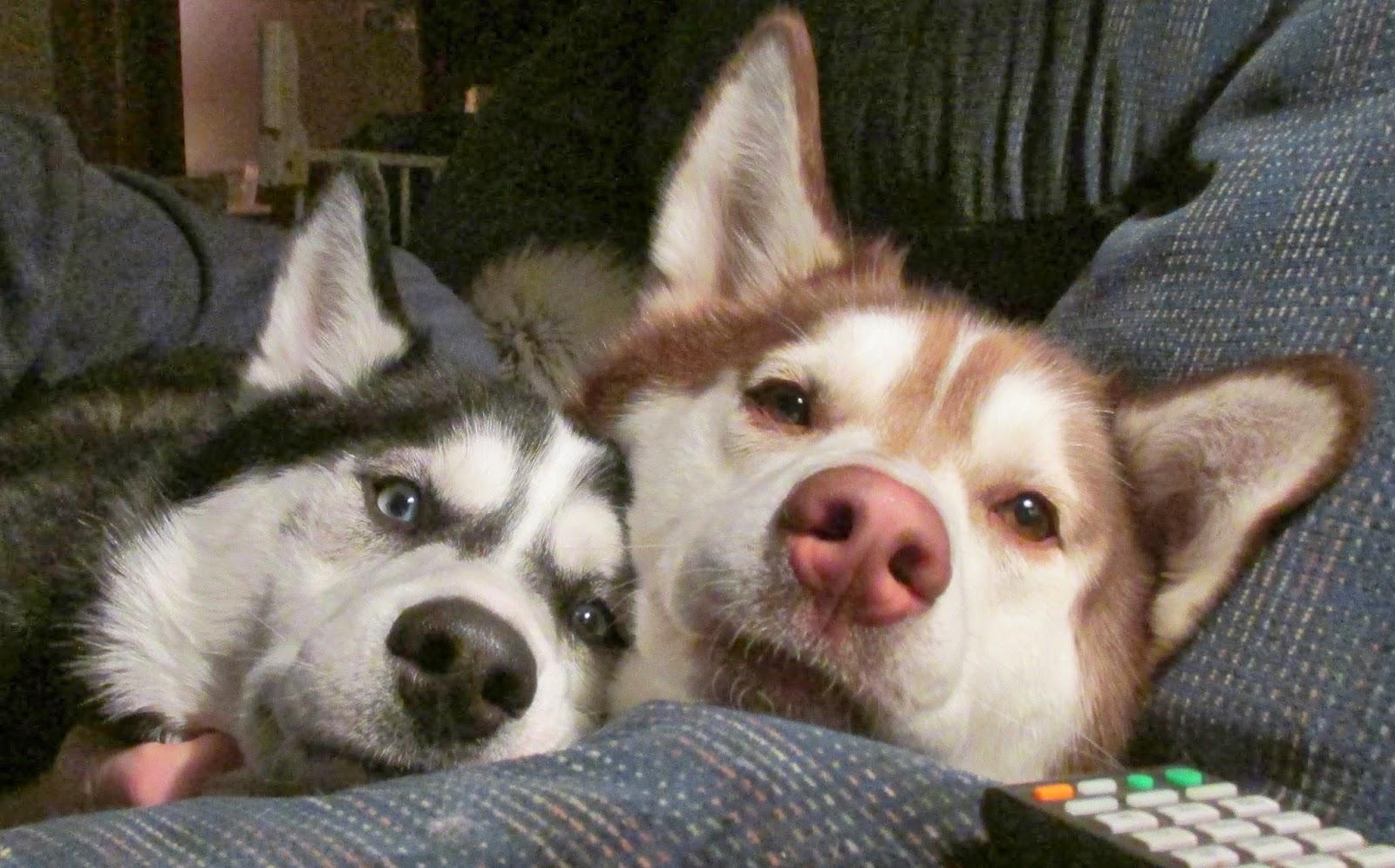 Loki & Thor's Dog Life