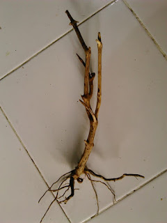 kayu untuk aquascape