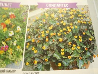каталог цветов сады россии