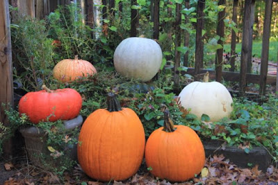 October's front porch pumpkin patch