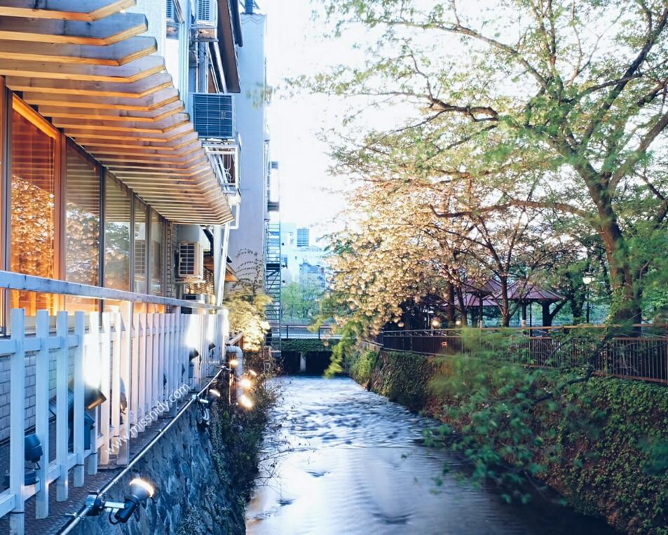 berburu sakura di kyoto