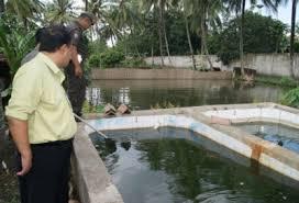 contoh kolam ikan arwana