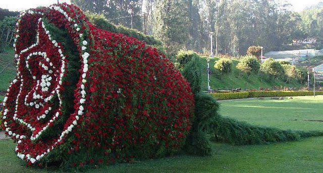Beautifull and Amazing Flower