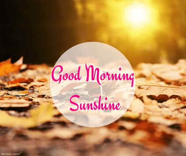 good morning beautiful sun shining pictures