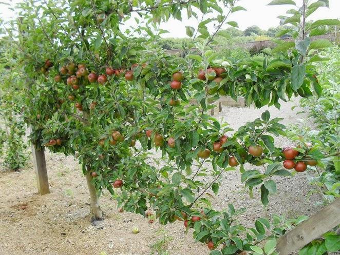 Manejo em horta escolar transdisciplinaridade e sustentabilidade 2