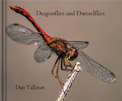 NEW  EDITION: Dragonfly eBook $7.99. Also other formats. Click cover image.