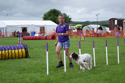 Dog agility in Cornwall