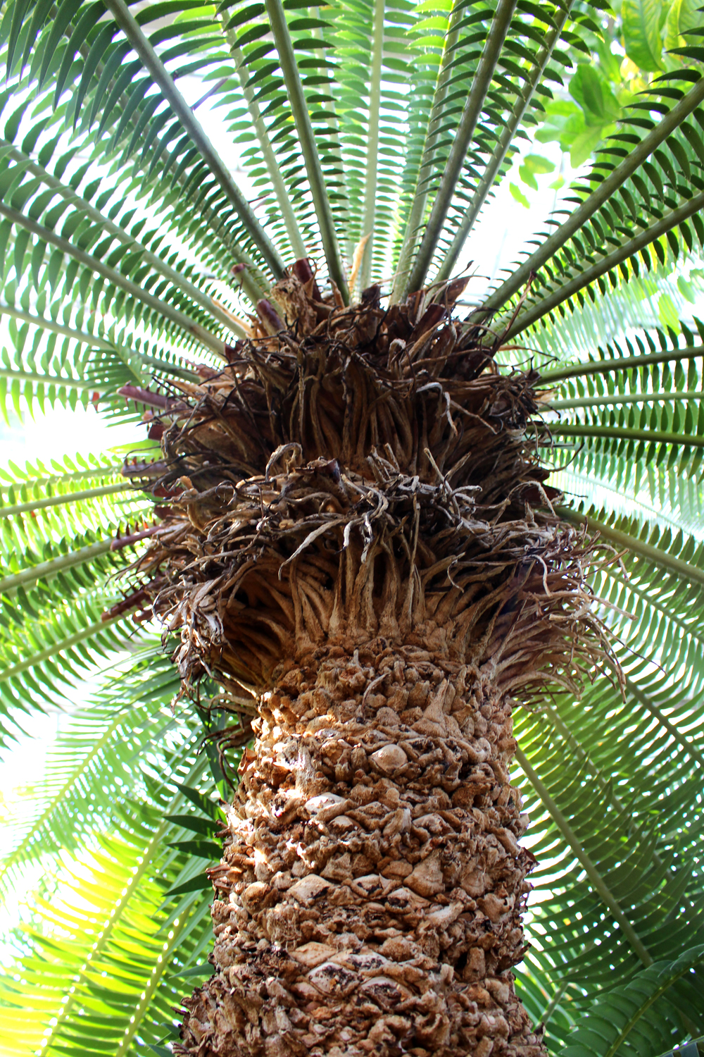 Berlin Botanical Garden palm tree - travel & lifestyle blog