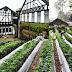 Wisata kebun sayuran natural farmhouse lembang bandung