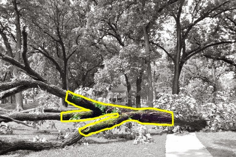 Magic Under Orton Park Oak >> Between Two Lakes When A Tree Falls And People Are Listening It