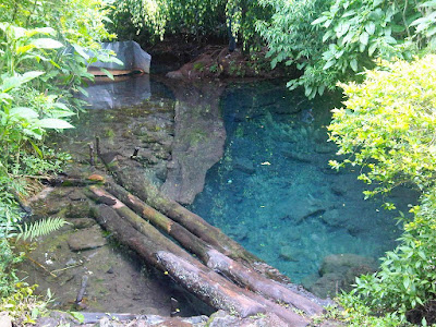 Ekosistem Air Tawar dan Ciri-Cirinya
