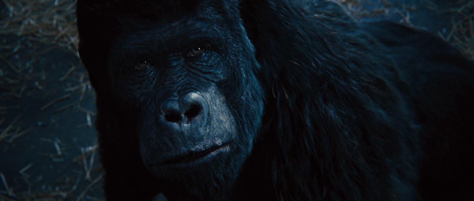 El Planeta de los Simios: (R)Evolución (2011) BRRip 1080p Latino - Ingles captura 3