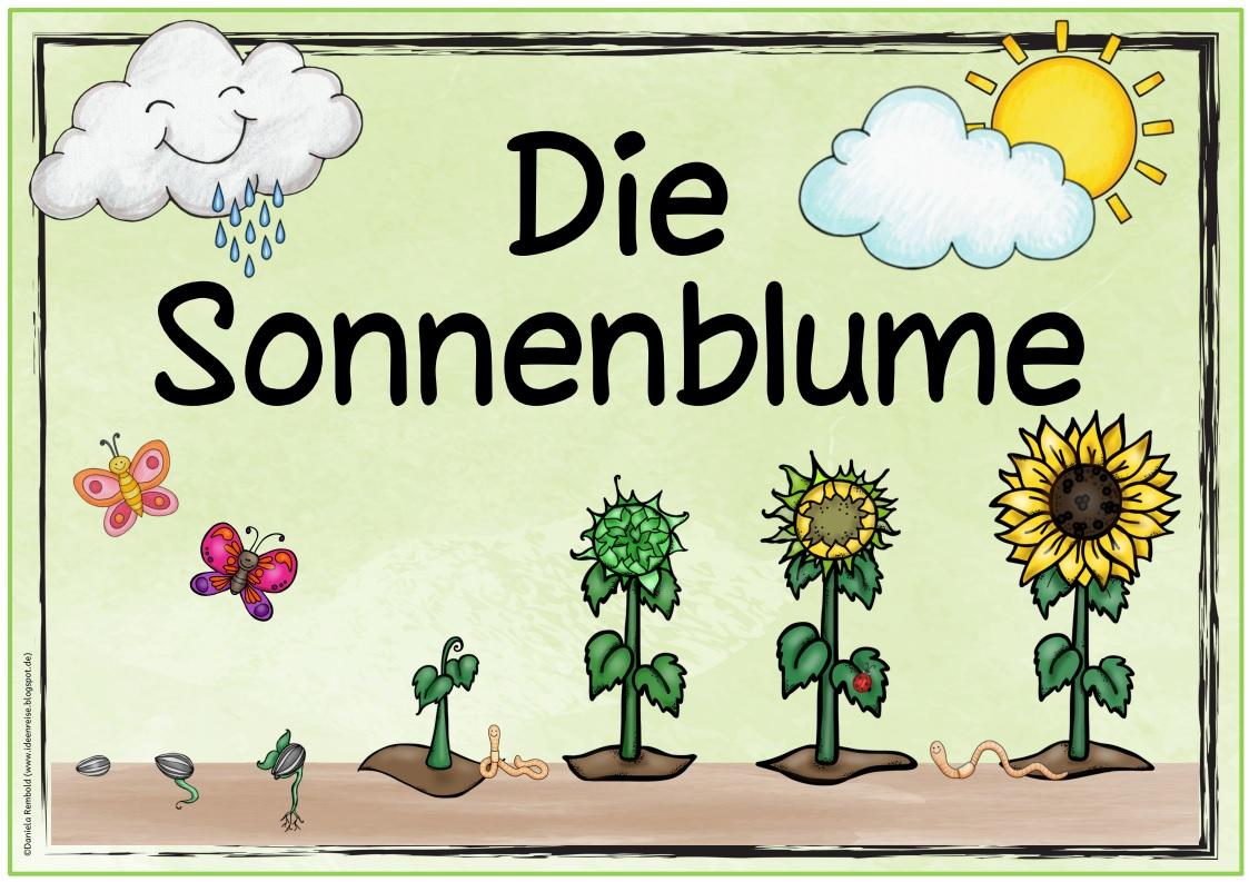 Ideenreise Themenplakat Die Sonnenblume Sonnenblumen Blumen