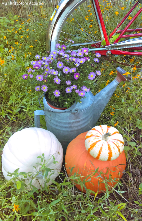 fall asters and wildflowers
