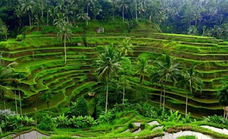 Penjelasan Mengenai Tujuan Konservasi Tanah