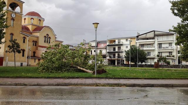 Γιάννενα: Ανεμοι 7 Μποφόρ Πνέουν ... Στην Ηπειρο Δέντρο Ξεριζώθηκε Στα Σεισμόπληκτα Ιωαννίνων [ Φωτο]