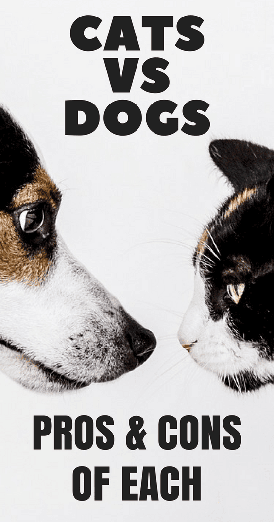 Cats vs Dogs - The Pros and Cons of Each