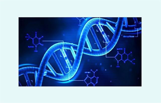 Pengertian DNA, Sifat DNA, Fungsi DNA, Replikasi DNA