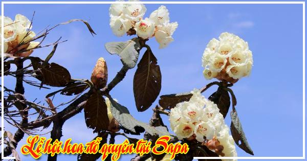 Lễ hội hoa đỗ quên tại Sapa tháng 4/2017
