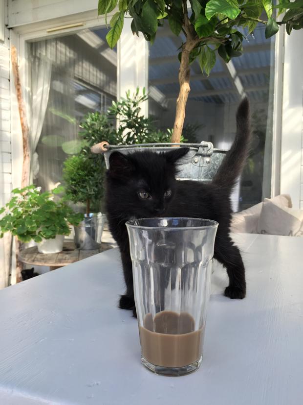 svart kattunge hannashantverk.blogspot.se