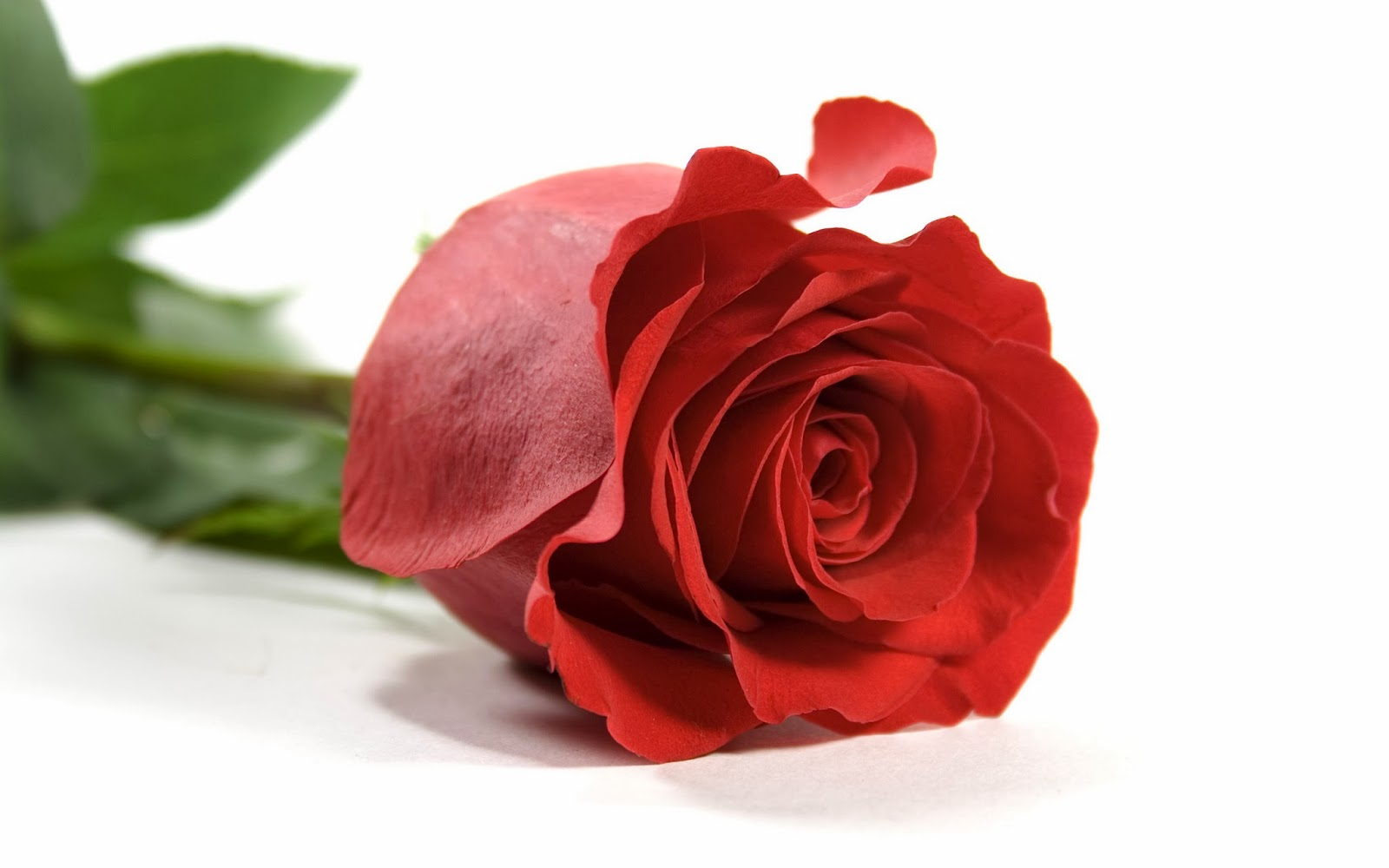 Red rose hd flowers wallpapers flowers - Red rose flower hd images ...