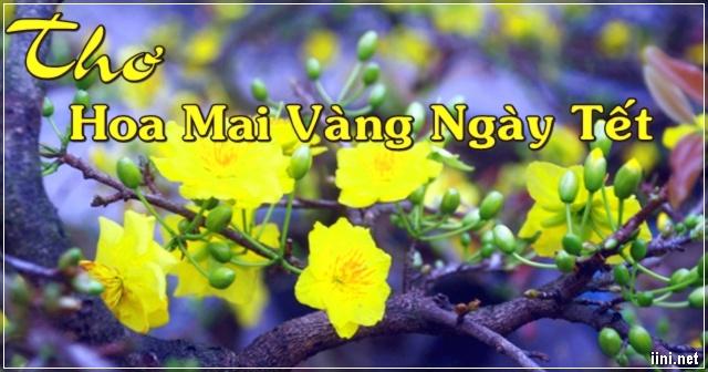 Thơ Viết Về Hoa Mai Vàng Ngày Tết
