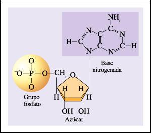 ḽїδβӛϯч ᴙ ⱥ 2 1 Estructura Química Y Física De