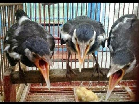 http://tipspetani.blogspot.com/2017/11/cara-memulai-bisnis-peternakan-burung.html
