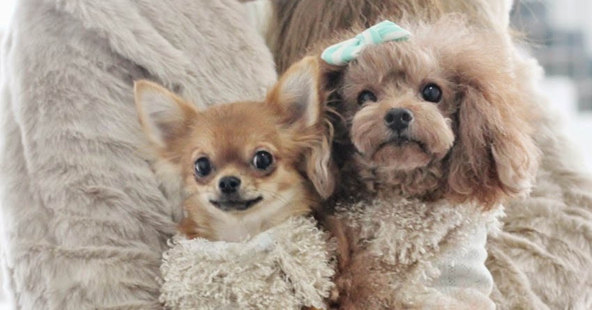 Hip Designer Dog Clothes: HAPPY SUNDAY