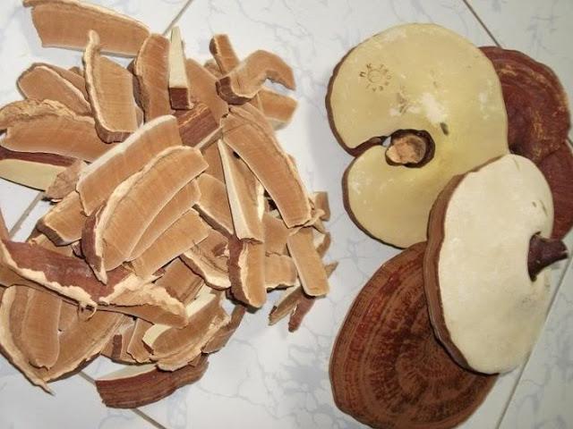 công dụng của nấm linh chi vàng gana