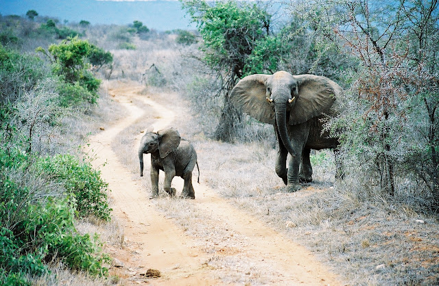 mother-elephant-with-her-baby-My List Mag