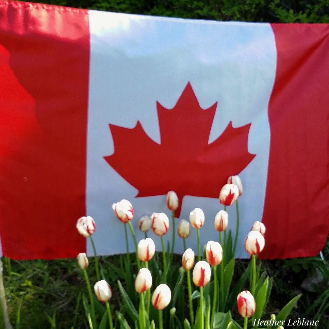 Fundy Gardeners July S