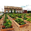The Process to Starting a Community Garden in Milwaukee