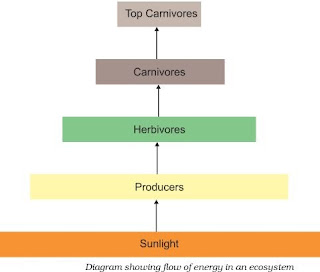 Notes of Ch 15 Our Environment| Class 10th Science - Study