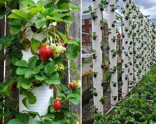 Unusual Garden Pots